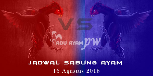 Jadwal Sabung Ayam 16 Agustus 2018