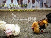 Link Alternatif Sabung Ayam