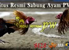 Situs Resmi Sabung Ayam PW