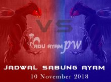 Jadwal Sabung Ayam 10 November 2018
