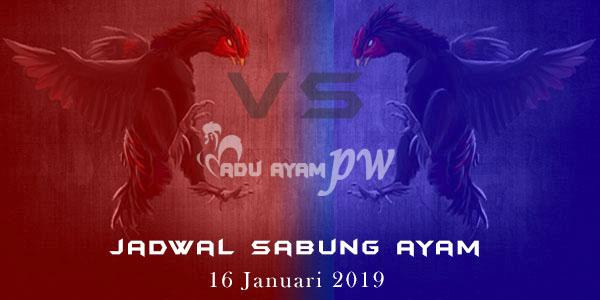 Jadwal Sabung Ayam 16 Januari 2019