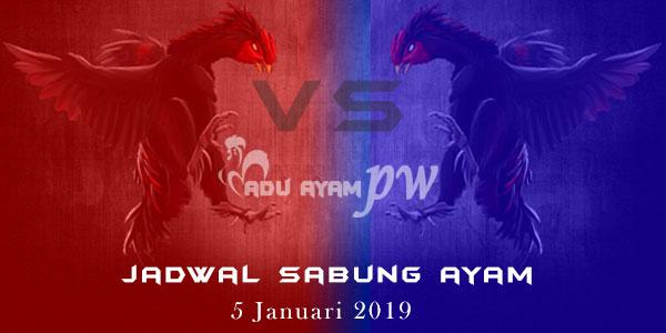 Jadwal Sabung Ayam 5 Januari 2019