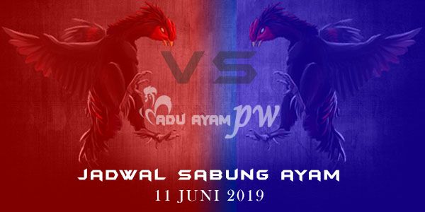 Adu Ayam PW - Jadwal Sabung Ayam 11 Juni 2019