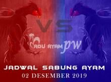 Jadwal Resmi Tarung Ayam Live 02 Desember 2019