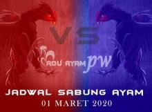 List Jadwal Sabung Ayam Indonesia 01 Maret 2020