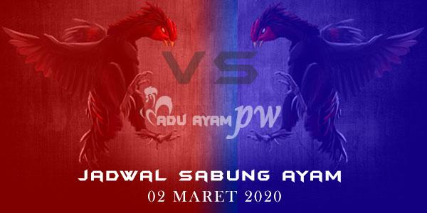 Jadwal Pertarungan Sabung Ayam Live 02 Maret 2020