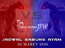 Daftar Prediksi Adu Ayam Online 06 Maret 2020