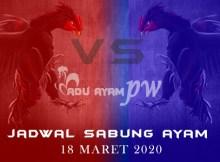 Jadwal Akurat Adu Ayam Live 18 Maret 2020