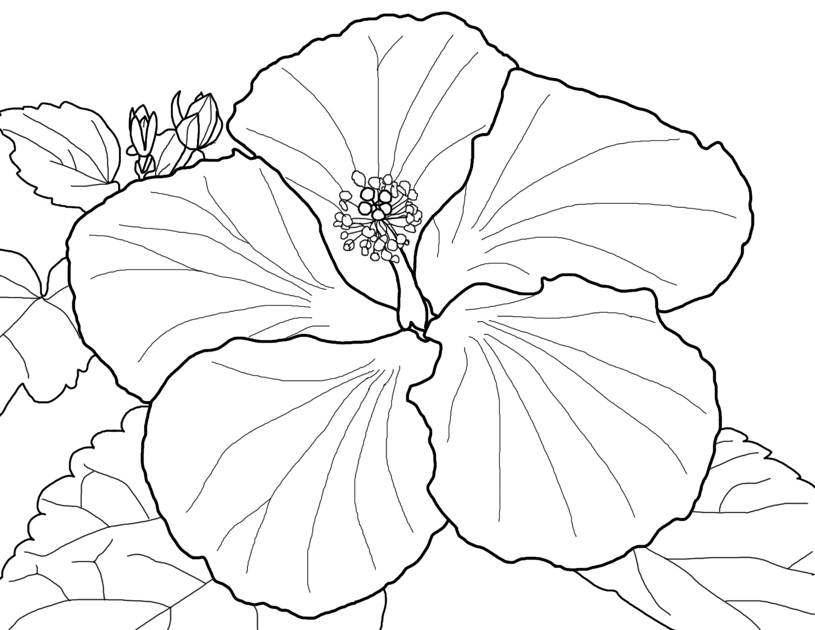 flowers coloring sheet big flower coloring pages flowers