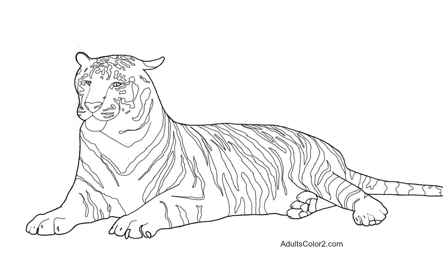 Tiger Coloring Pages Powerfulcats Sketch Coloring Page