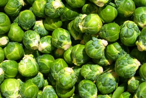 Brussels Sprouts Reduce DNA Damage Caused by Oxidative Stress