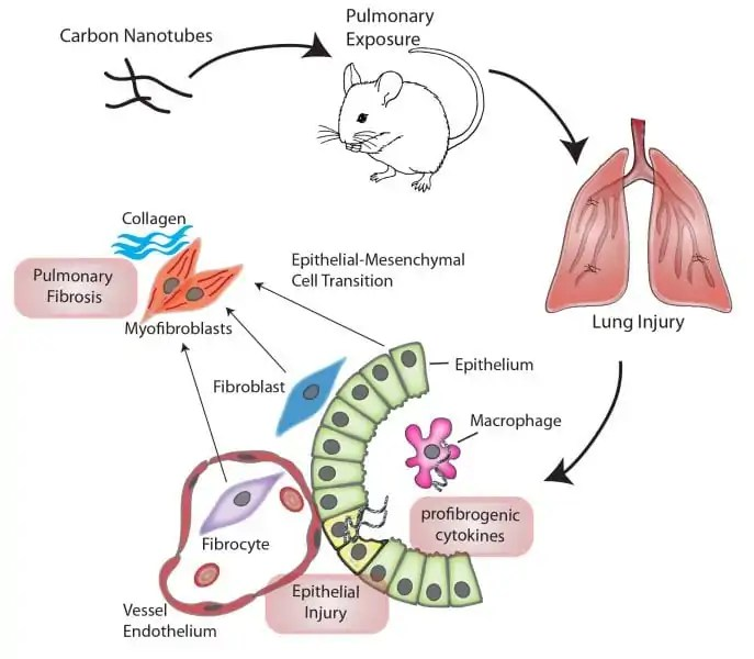 Mechanisms Of Carbon Nanotube Induced Pulmonary Fibrosis