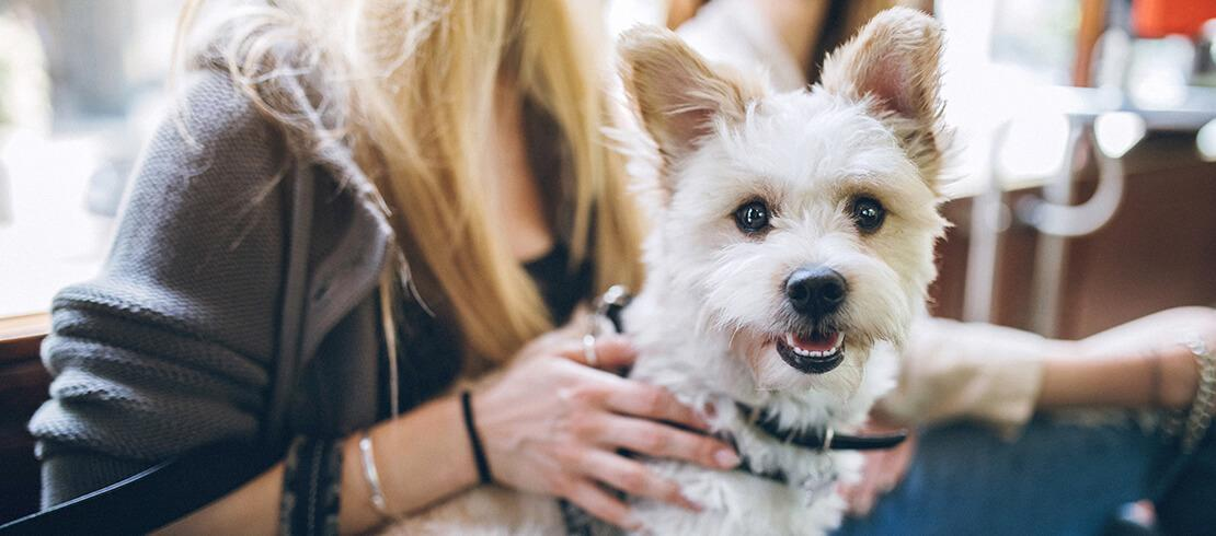 The 5 Best Dog Breeds For Apartments And Small Homes