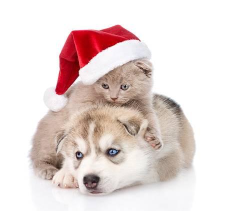 Julekalender til hund, katt og andre dyr