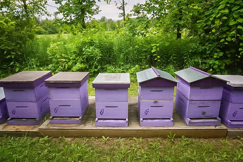 Terre Bleu Lavender Farm Apiary
