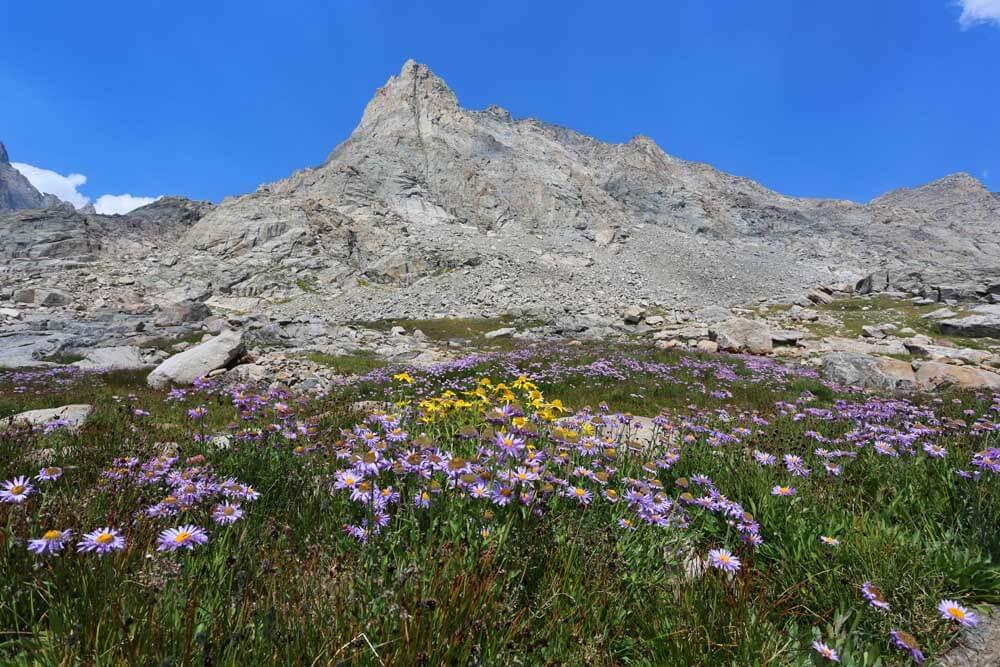 Wildflowers in upper Indian Basin.