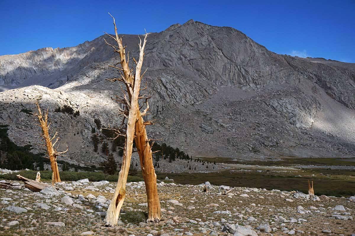 pines-wallace basin