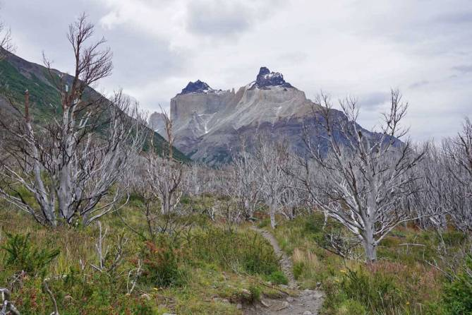 Burned trees at the start of the W Trek are a reminder of how devastating fires can be in windy Patagonia. It will take hundreds of year s for this area to fully recover.
