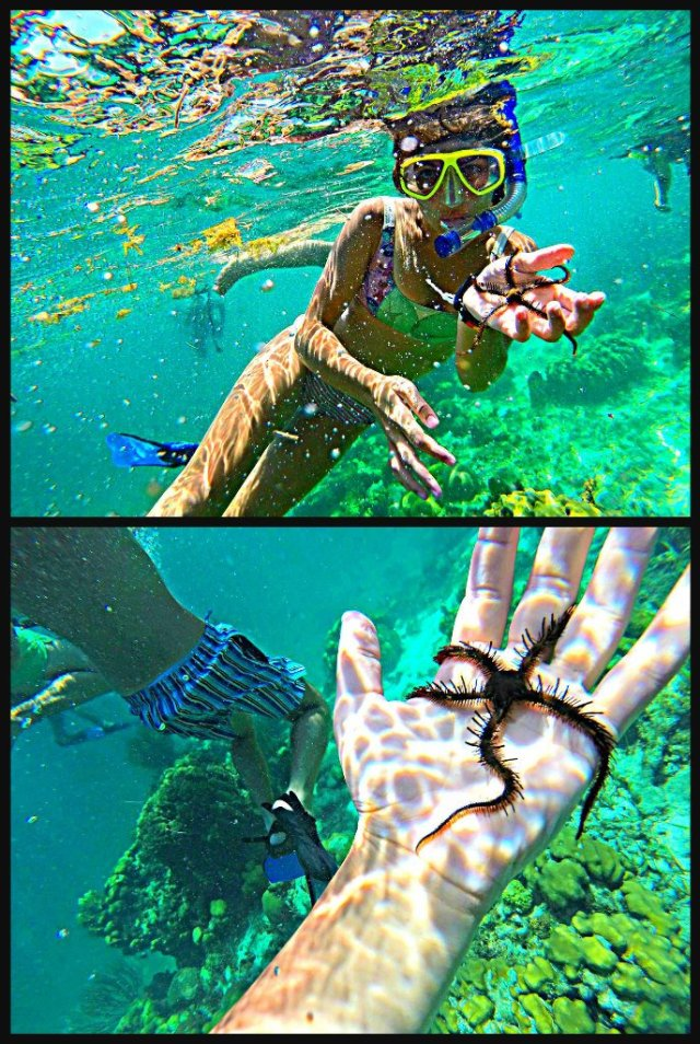 How to swim with sharks Caye Caulker Belize starfish