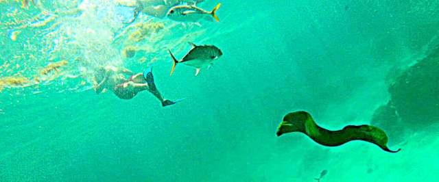How to swim with sharks Caye Caulker Belize moray eel