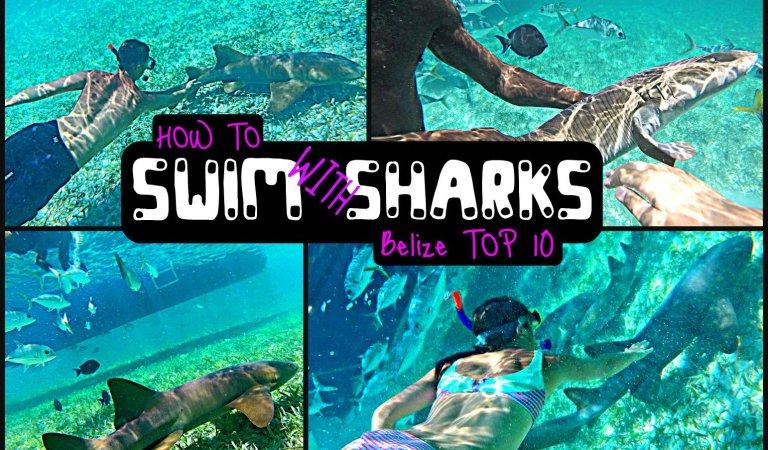 How to Swim with Sharks – Caye Caulker Belize Top Ten