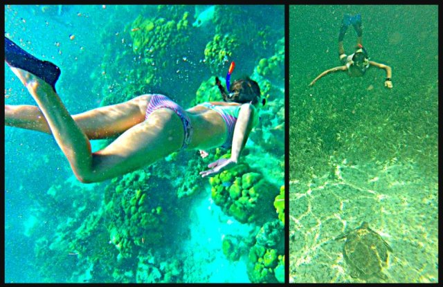 How to swim with sharks Caye Caulker Belize sea turtle