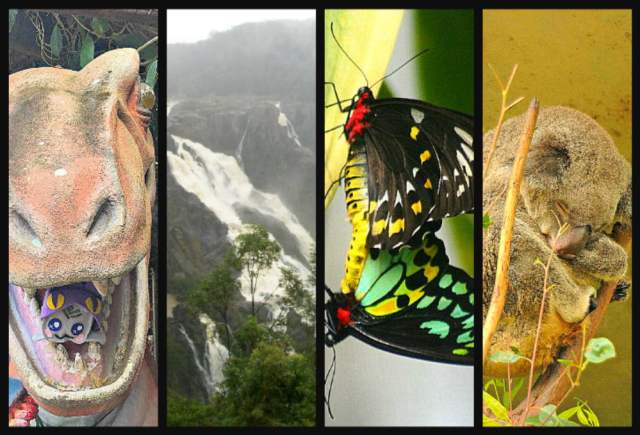 things to do in Kuranda Village in a Rainforest