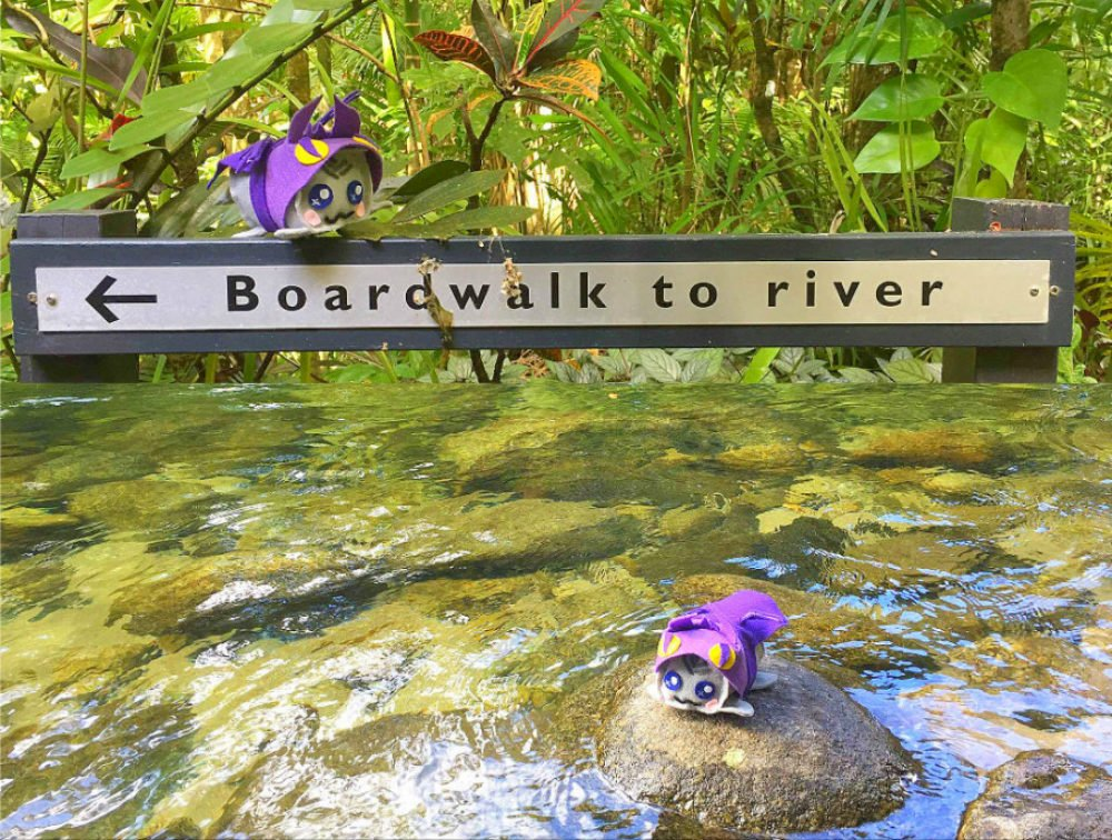 best beaches in Cairns beaches Mossman Gorge billabong Daintree Rainforest