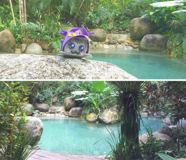 best beaches in Cairns Rainforest Treehouse Lagoon