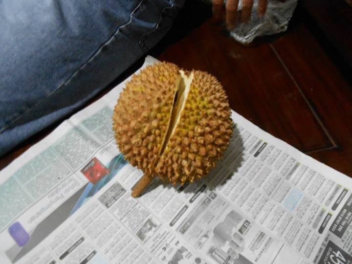 Cracking open a durian fruit