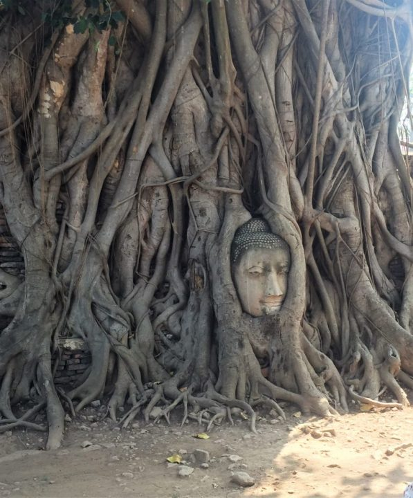 Buddha head in tree - Ayutthaya