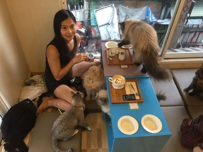 cat cafe chiang mai thailand