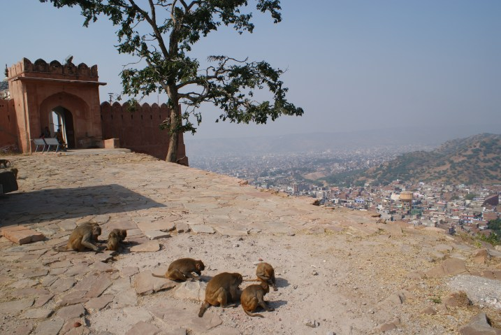 Monkey's keeping watch at Surya Mandir (Temple of the Sun God) in Jaipur.