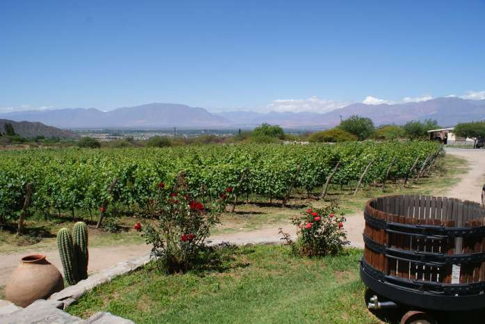 Vineyards surrounding Cafayate