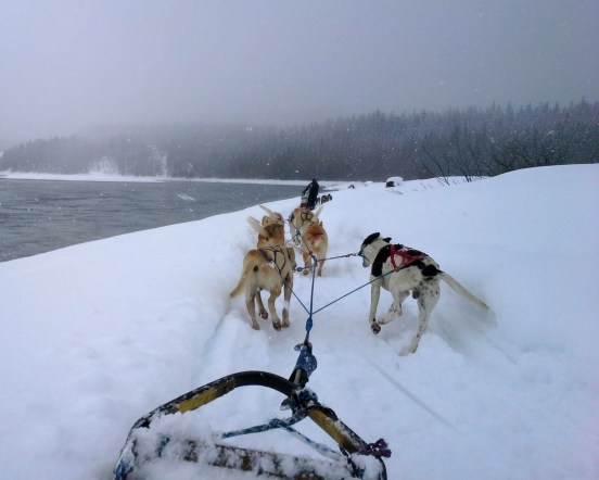 DogSled1