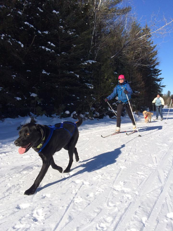 Skijoring: A Day With the Dogs