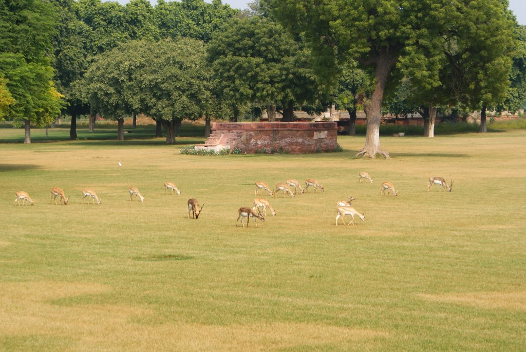 Wild deer grazing on the grounds of the tomb.