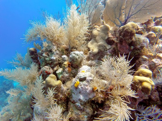 Diving on a reef