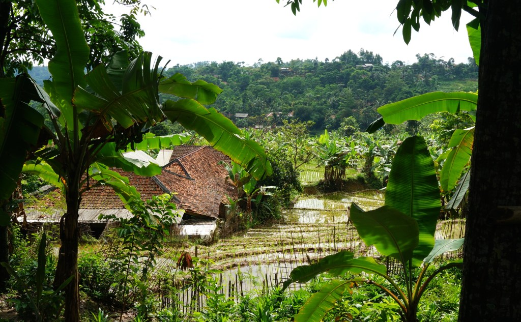 Rice terraces in the countryside villages.