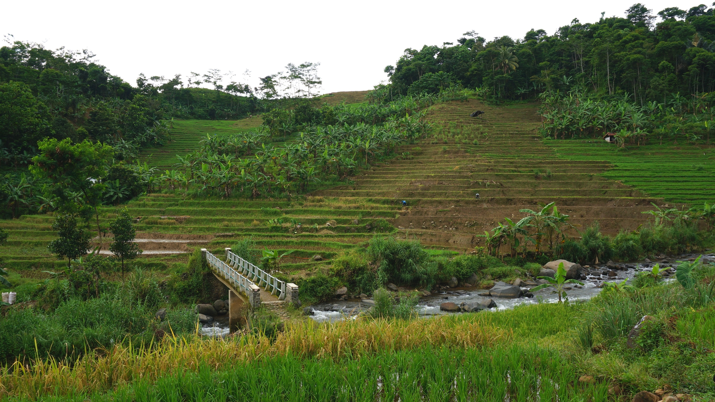Rice terraces and a mountain stream.