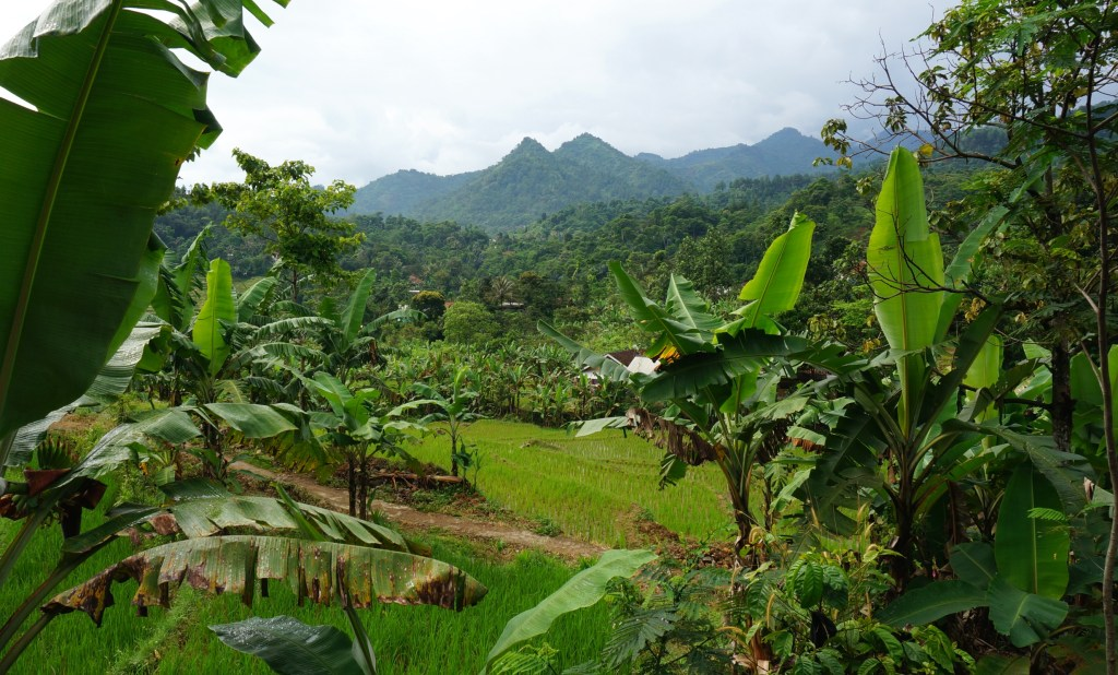 The beautiful countryside of Java.