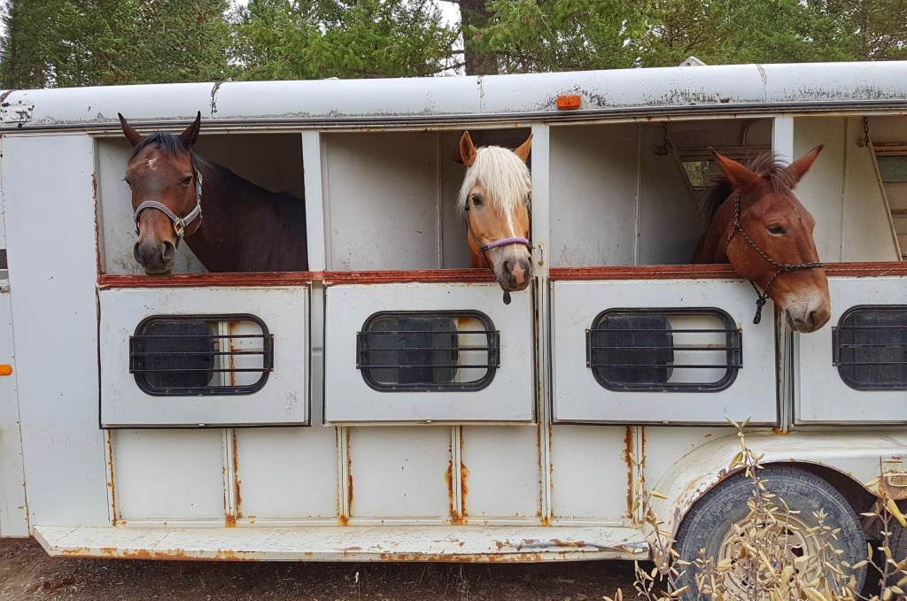 Luna, Fabio and Jamie Lee loaded on the trailer.