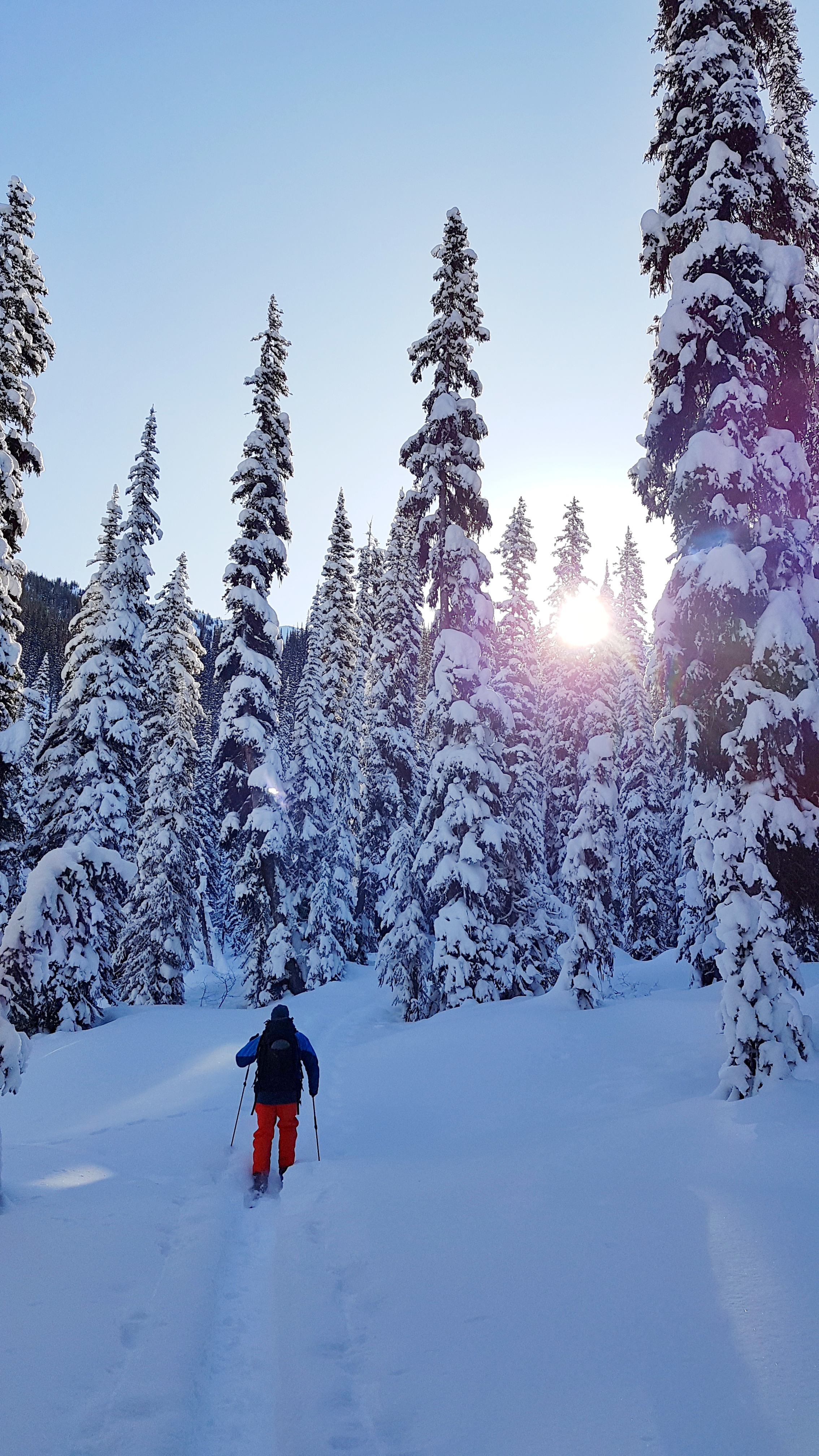 Mid-morning light in the backcountry.