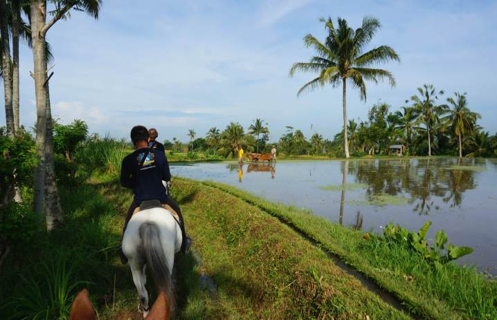 Advanced horseback ride in Bali.