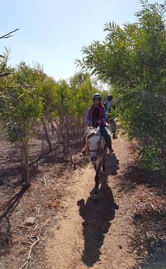 Riding through the eucalyptus forest.