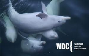 Dolphin Conservatory Kayak tours