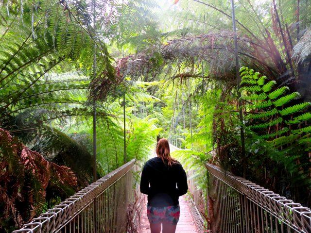 Walking along the Swing Bridge at Tara Bulga National Park