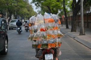 """Hey fish, motorbike you!"" Ho Chi Minh City, Vietnam"
