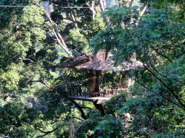 flight of the gibbons ziplining chiang mai