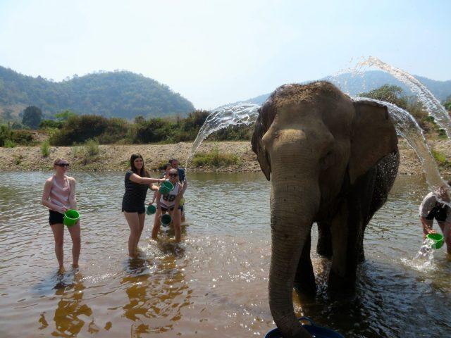 Bathing an elephant at Elephant Nature Park